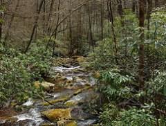 Slate Rock Creek on FR 1206