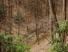 Slate Rock Creek Trail