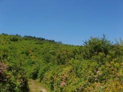 Wildflowers on Grassy Cove Ridge