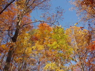Autumn at its finest