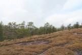 Moss and lichen cover the granite