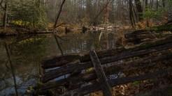 Davidson River fence