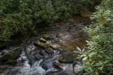 Cedar Rock Creek