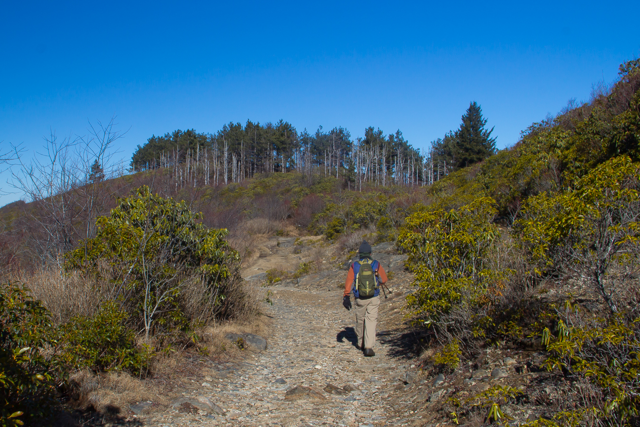 pisgah forest black personals Buy national geographic pisgah nat frsttrail map #780 by north carolina  coverage includes pisgah national forest  black number of items.