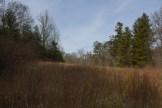 Grasses near beaver pond