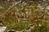 Moss spores