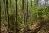 Art Loeb Trail descending