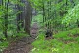 Daniel Ridge Trail