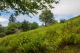 Lower Fork Ridge