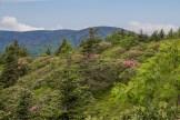 South side Grassy Ridge