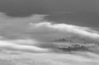 A.M. Shadows in the Fog