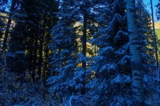 Back Lit Forest