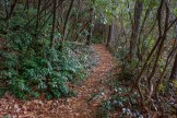 Leafy Greenland Creek Trail