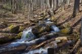 West Fork Fisher Creek