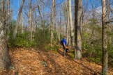 Yellow blaze Palmetto Trail