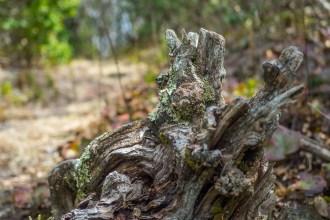 Encrusted stump