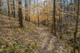Beech trees enhance the trail