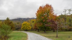 Fall colors in Morse Park