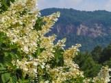 Hickory Nut Gorge cliffs