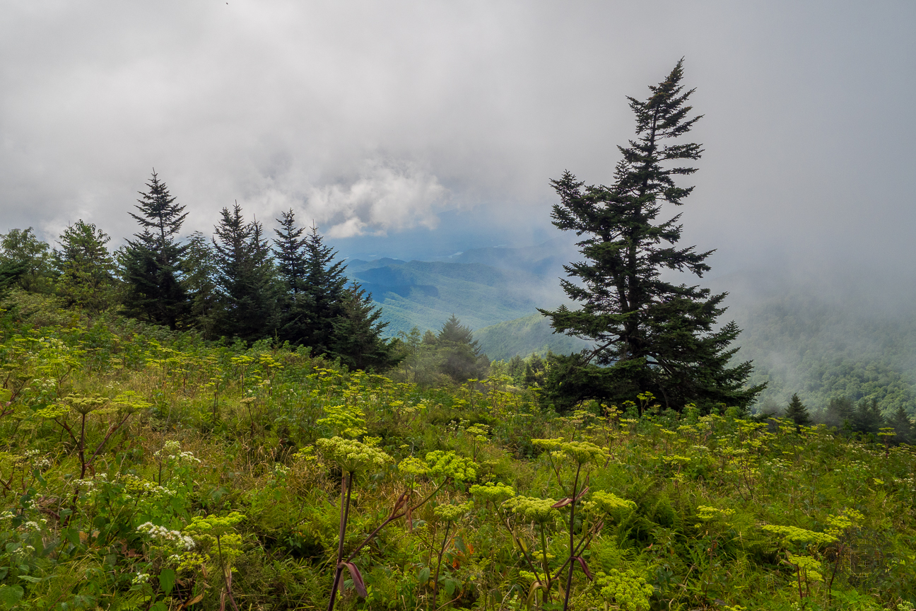 Meanderthals | Clingmans Dome Area Trails, Great Smoky ...