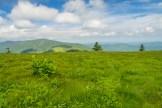 Hosta on Grassy Ridge