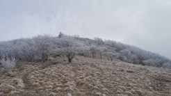 Rime ice covered trees