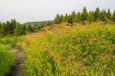 Shoulder high grass