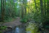 Rough Fork trail side