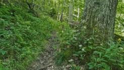 Trail garden