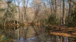Leaf jam pool on Bradley Fork