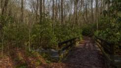 Crossing Chasteen Creek
