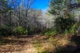 Buckhorn Creek Road