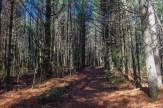 Cannon Creek Trail