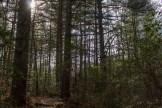Wilkie Trail