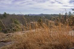 Wispy grass on Micajah pluton