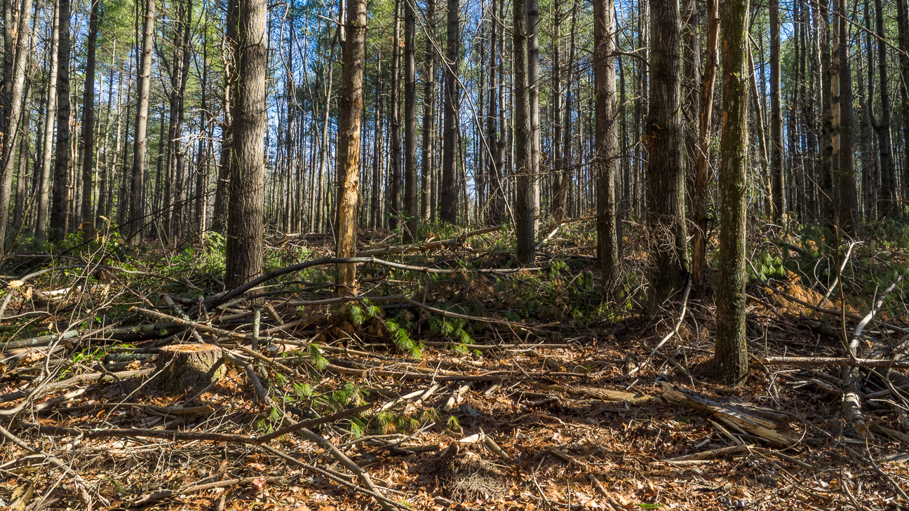 Meanderthals   Flat Rock and Plantation Trails, DuPont ...