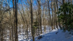 Sapling forest near the bald