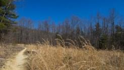 Beginning Hickory Mountain Loop