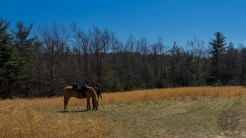 Meadow at Hickory Mountain Road