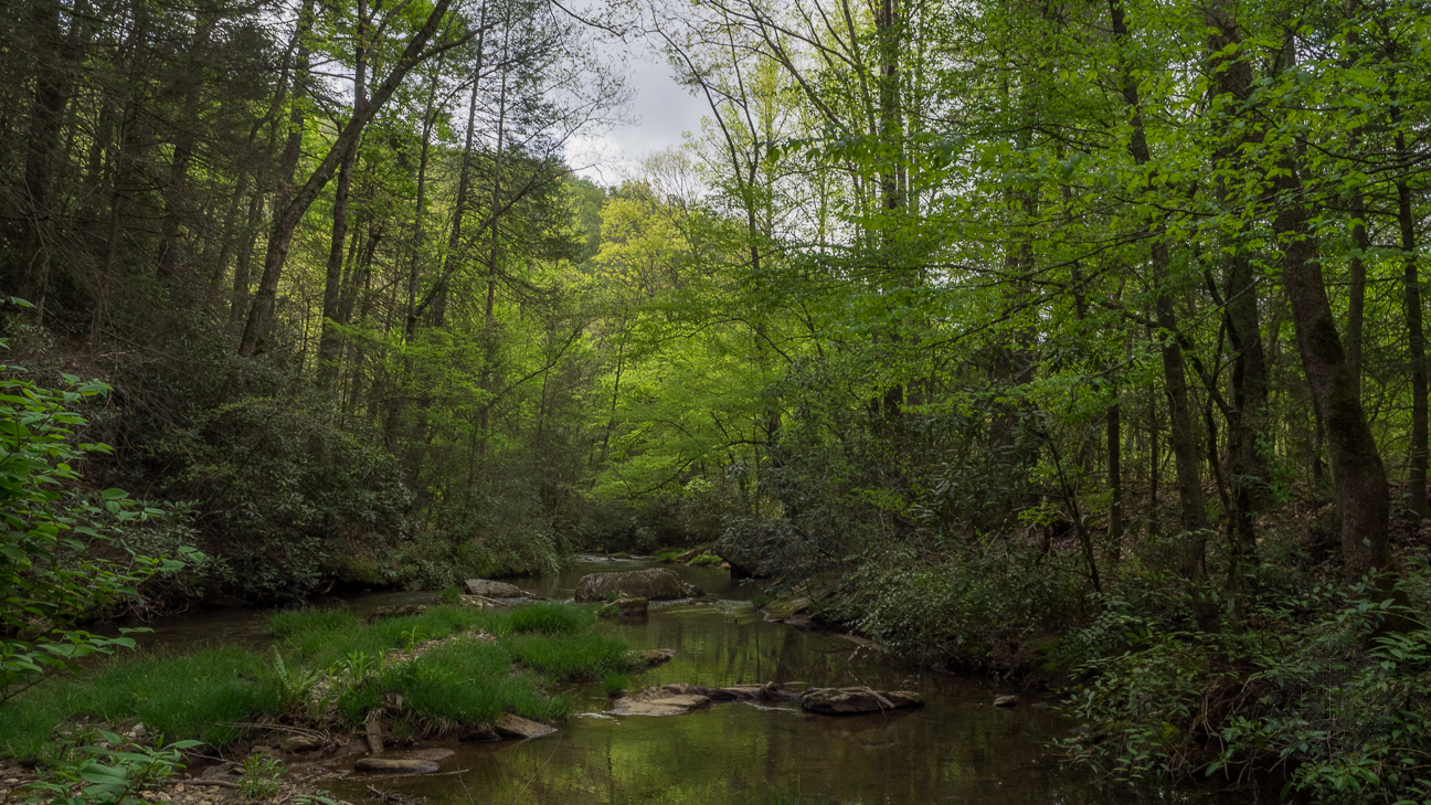 If you take the right fork in the meadow, this is the reward... a delightful view upstream of Cove Creek surrounded by a greening tree canopy.