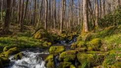 Creek tumbles thru the woods