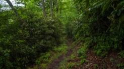 Heath lined trail