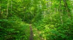 Goshen Prong Trail