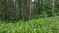 2nd growth forest