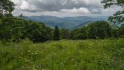 Top of hillside meadow