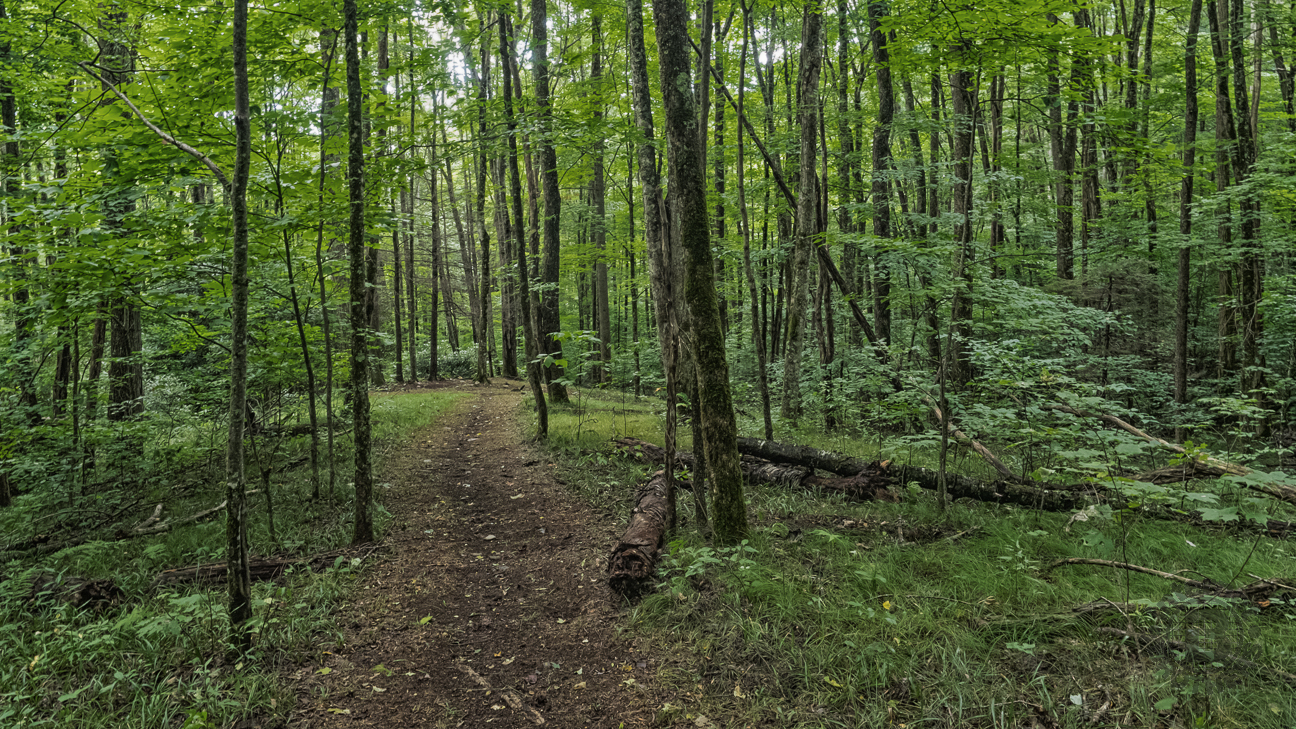 We pulled up a log and enjoyed sammiches and apples, and near complete silence. Correll Branch Cove is a remarkable place. This spur trail in the picture goes to a small clearing.