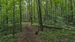 Correll Branch cove