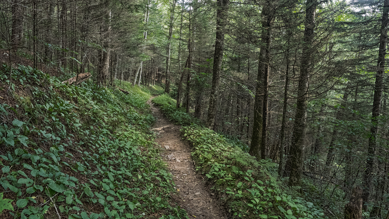 Meanderthals balsam mountain trail to laurel gap great for Balsam mountain