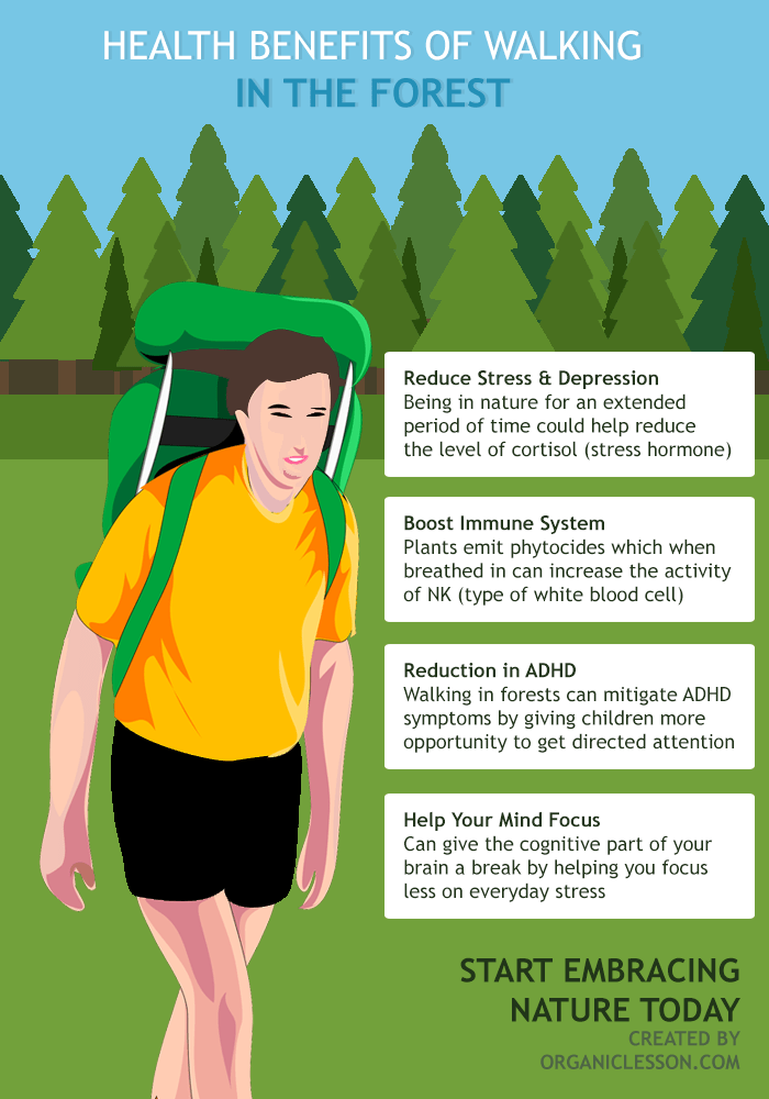 Health Benefits of Walking in the Forest