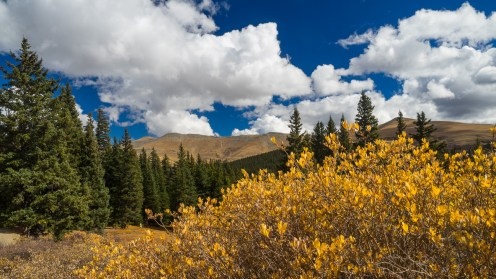 Willow, spruce, mountains, clouds